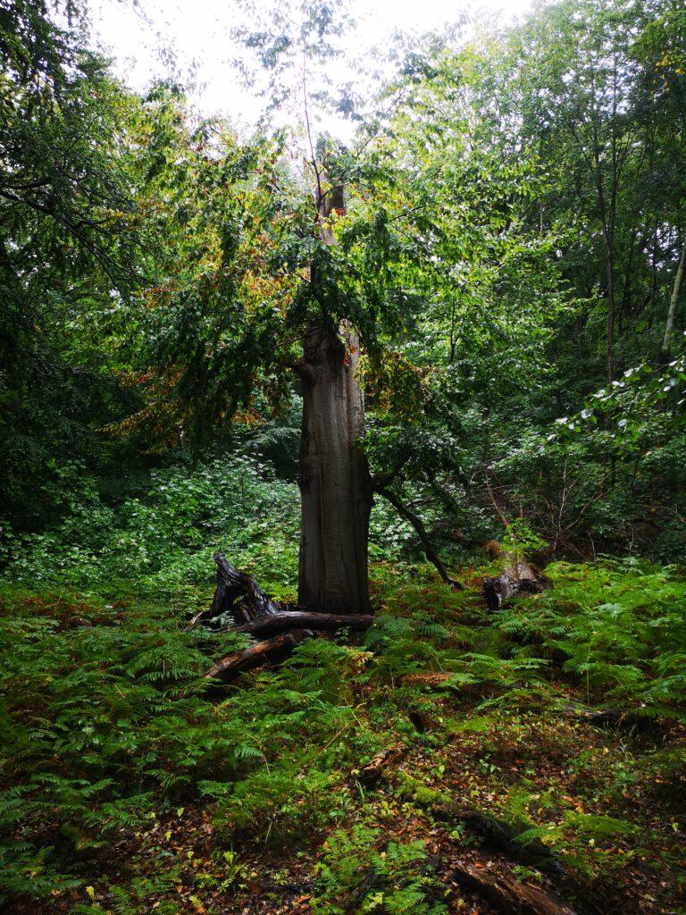 Insel Vilm Ruegen Wald