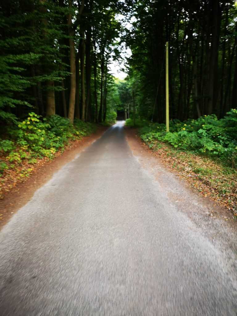 Waldweg Ruegen Radweg Rundweg Sassnitz nach Moenchgut