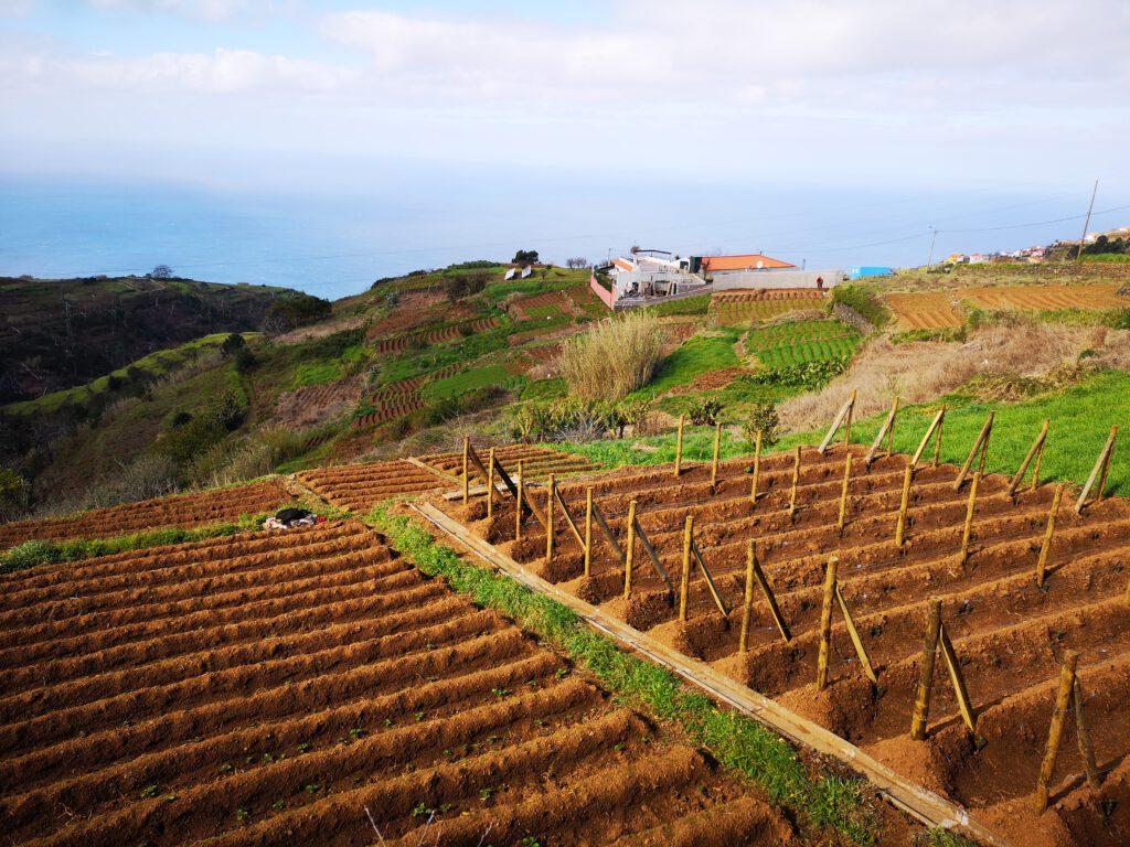 Felder auf Madeira